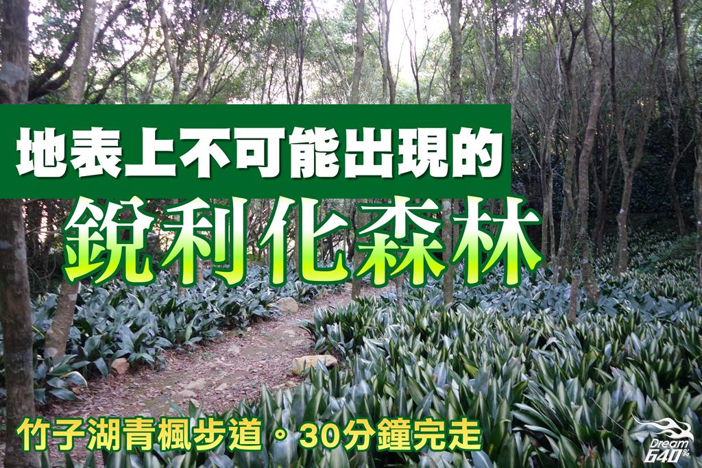 竹子湖青楓步道34