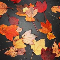 #fall #leaf #color #atlanta