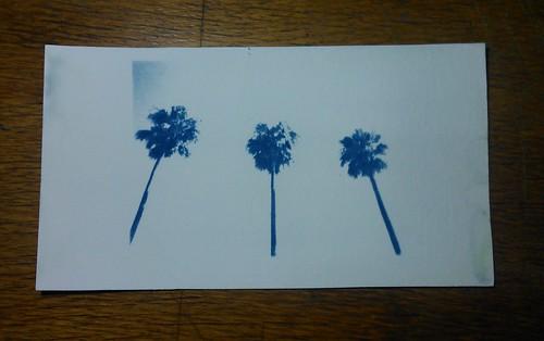 10.  Cyanotypes - Palm trees