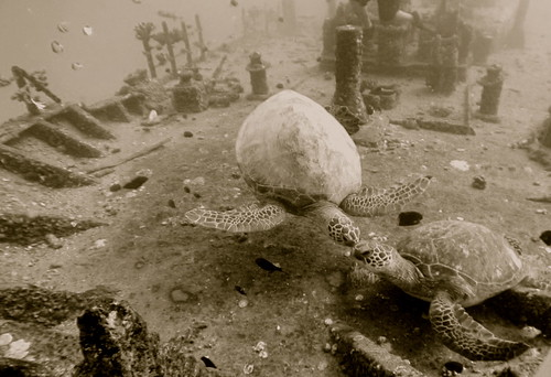 Diving in Oahu