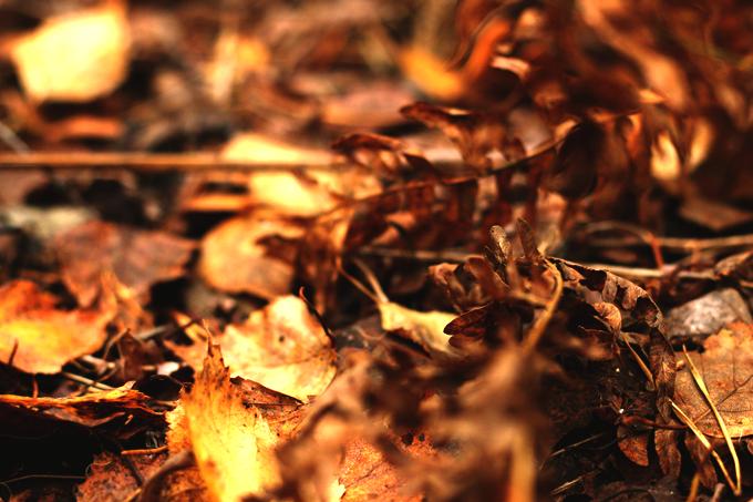 metsä 228 – Kopio