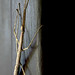 walking stick by front door by lesess