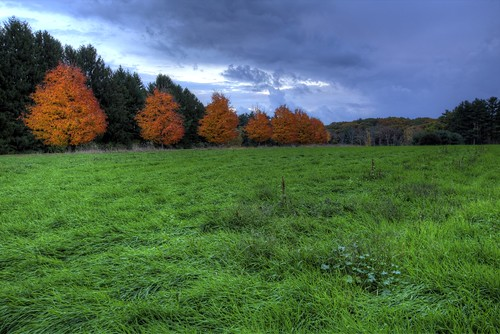 fall field grass out stand massachusetts foliage hdr stasburdan