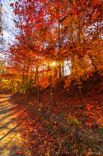 statepark park autumn trees sunset red fallleaves fall colors leaves forest photoshop golden nikon scenic autumnleaves foliage otoño dslr sweetwater lightroom sweetwaterstatepark autumnsunset nikondslr fallsunset d7000 nikond7000