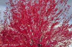 Autumn 267