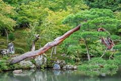 Tenryu Tree