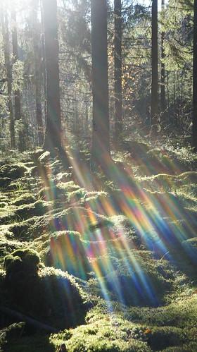 forest suomi finland sony snapshot trail flare virrat metsä vastavalo heijastuma luontopolku nex3 näpsy