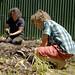 Gardeners 8