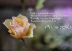 Psalms 71:7-8 nlt