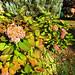 Fleurs aux tons d'automne by !MimosaMicheMichelle!