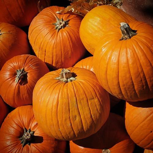 happy thanksgiving ...  #happythanksgiving #pumpkin #pumpkins #orange #fall #autumn #grateful4 #thanksgiving #nofilter