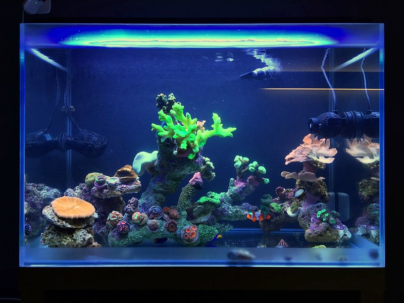 Fluval sea full spectrum reef led light manhattan reefs fluval sea marine reef full spectrum performance led strip light provides a balanced combination of multiple leds for optimal photosynthetic activity aloadofball Image collections