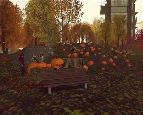 We love pumpkins!!