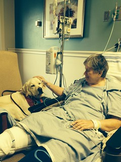 Therapy dog in hospital