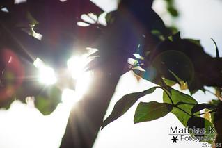 Sonnenstrahlen | Projekt 365 | Tag 291