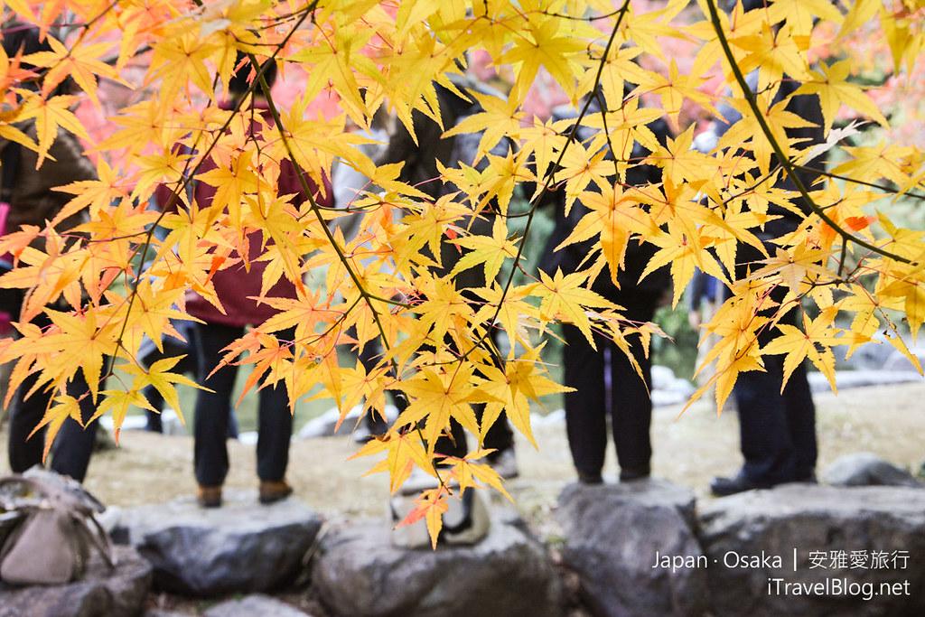 大阪赏枫 万博纪念公园 红叶庭园 16