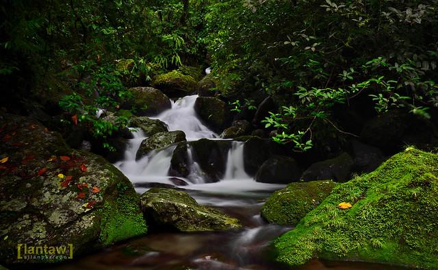 Hidden Cascades