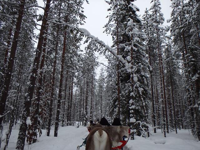 Finlandia - Rovaniemi