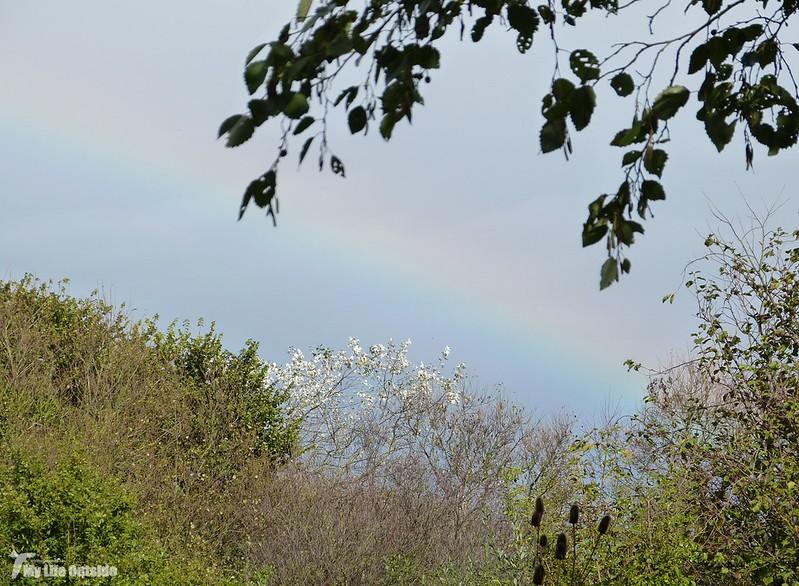 P1090913 - Rainbow, WWT Llanelli