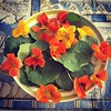 As my ancestors used to do, today I prepared a healing salad with flowers from my garden!  #Capuchina #Tropaeolummajus #tropaeolum #Tropeoláceas #medicine #naturalmedicine #medicinanatural #food #foodlover #flowers #flordeamor, #florde asangre, #berrodeMé