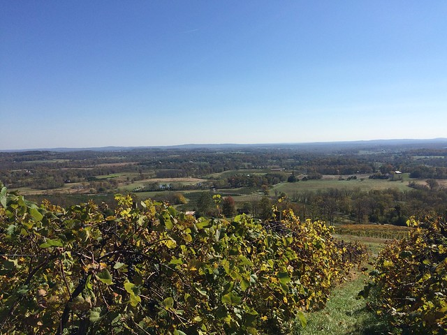 Bluemont Vineyard, Bluemont VA