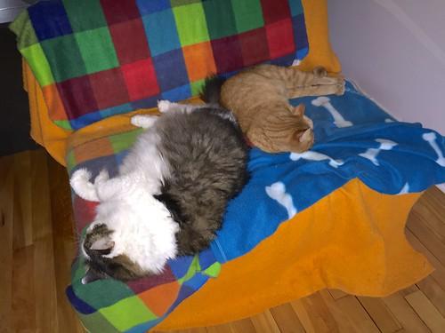 Both cats sleeping