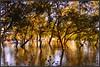 mangrove in high tide