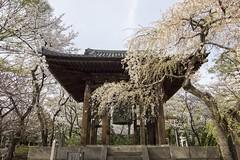 Shrine Bell