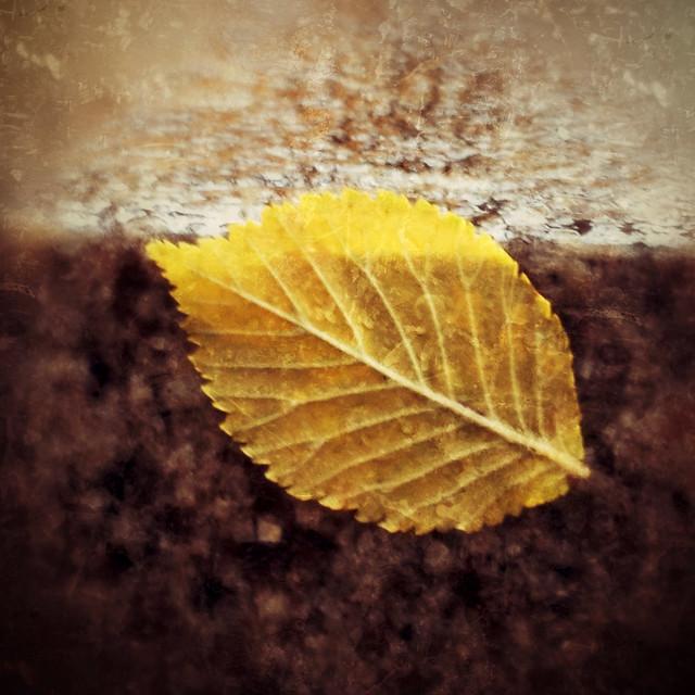 Wet leaf on a granite wall