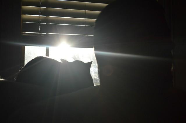 Cat Starburst Sun