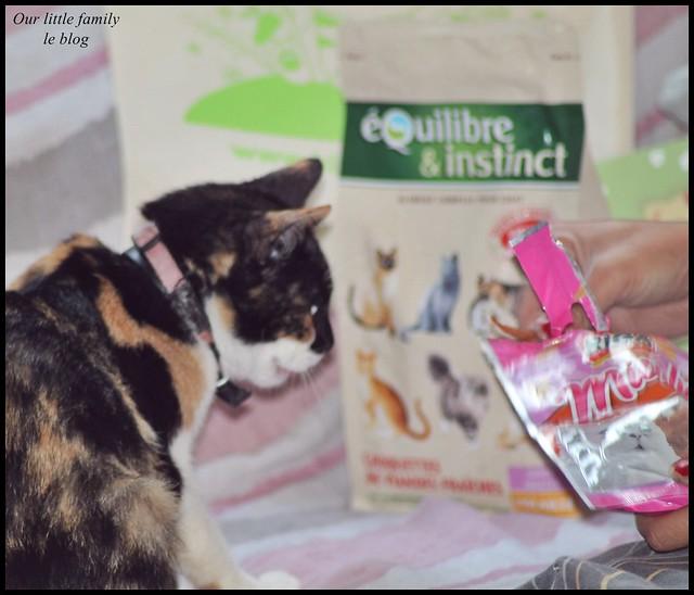 lakittyboxchatcat15