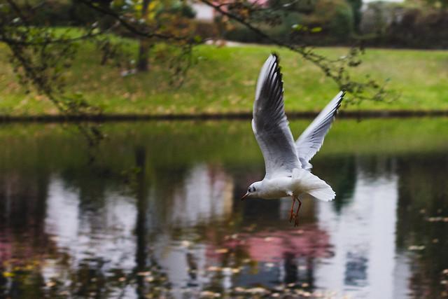 [227] Seagull