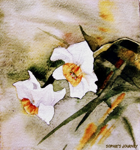 watercolor-narcissus