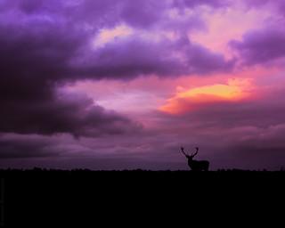 Sunset over the Longshore Estate // 02 11 14