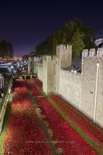 Poppies at The Tower of London to remember every one who lost their live in WW1. London at Night