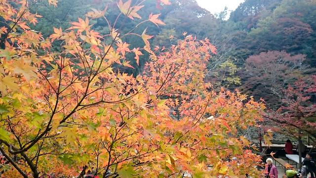 2014-11-16_香嵐渓