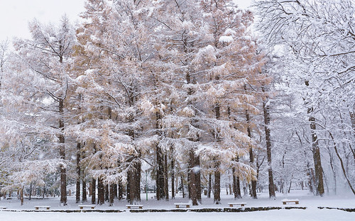 snow japan sapporo nikon hokkaido 北海道 札幌 冬景色 winterscene maruyamapark 円山公園 d7100 sigma1835mmf18art kaifudo saekinoi