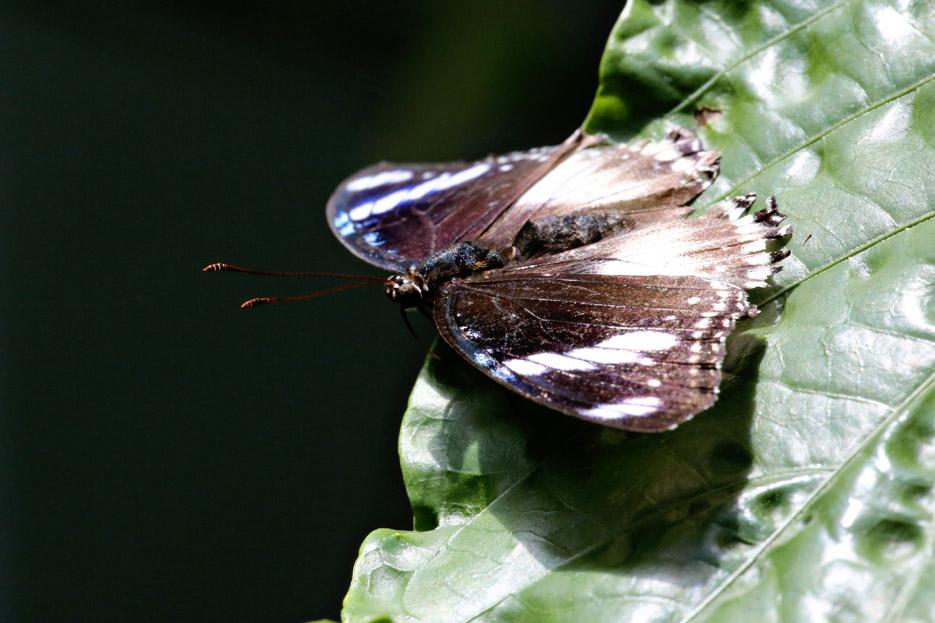 091014_01_butterfly08