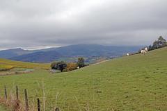 2016-10-24 10-30 Burgund 176 Berze-La-Ville - Photo of Péronne
