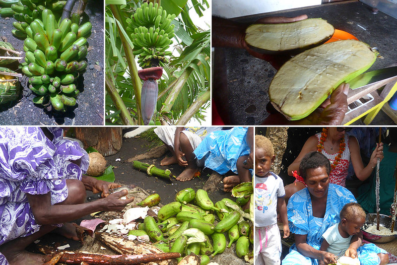 cooking Banana's are an important ingredient in Ni-Vanuatu cooking, but is extremely seasonal and is also vulnerable to extreme weather.