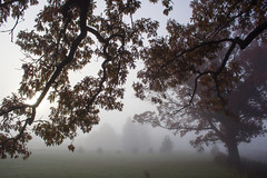 Watching and Waiting. Morning Fog in November