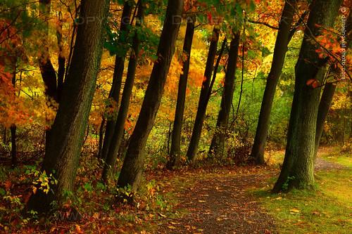 park autumn trees music ny newyork fall nature wet colors leaves landscape photography concert saturated buffalo path vivid birdsong foliage rainy trunks visual leaning westernnewyork podzim 2014 orchardpark stromy příroda turistika barvy buffaloniagara kmeny