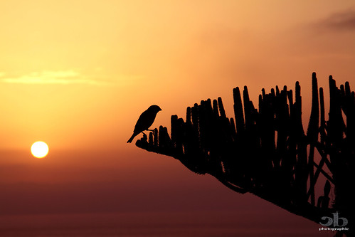 bird sunrise island greek insel santorini greece griechenland santorin coucherdusoleil greekisland cycladen leverdusoleil kykladen