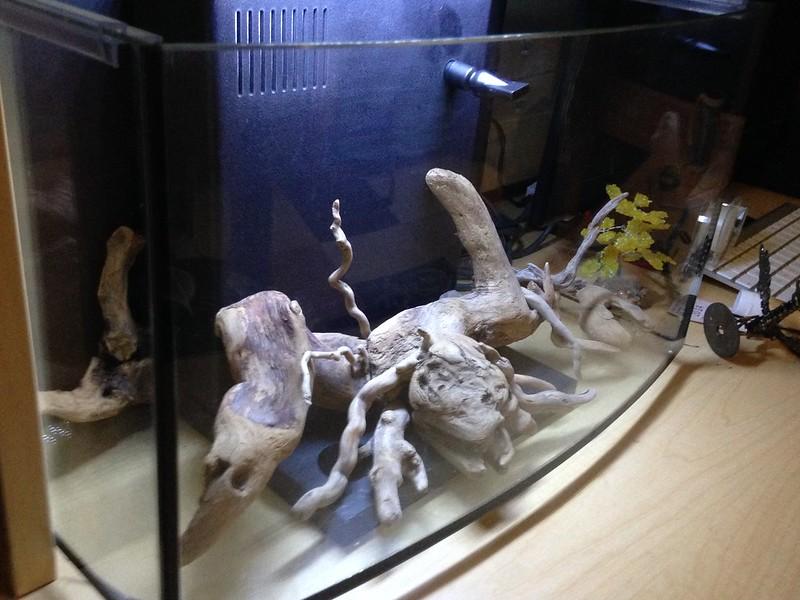 Petco Arc 6 25 Shrimp Tank - The Planted Tank Forum