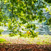 Small photo of Leaves by a Lake