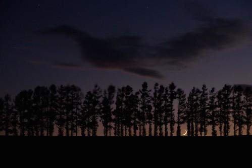 moon tree japan landscape hokkaido hill 北海道 日本 biei magichour crescentmoon 美瑛 月 マイルドセブンの丘 三日月 マイルドセブンの丘