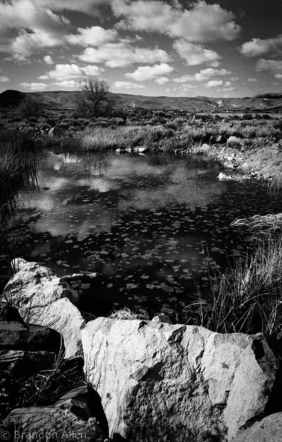 Spanish Springs Marshes