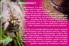 GROUNDNUT – answer to CROP QUIZ No 4: World Food…