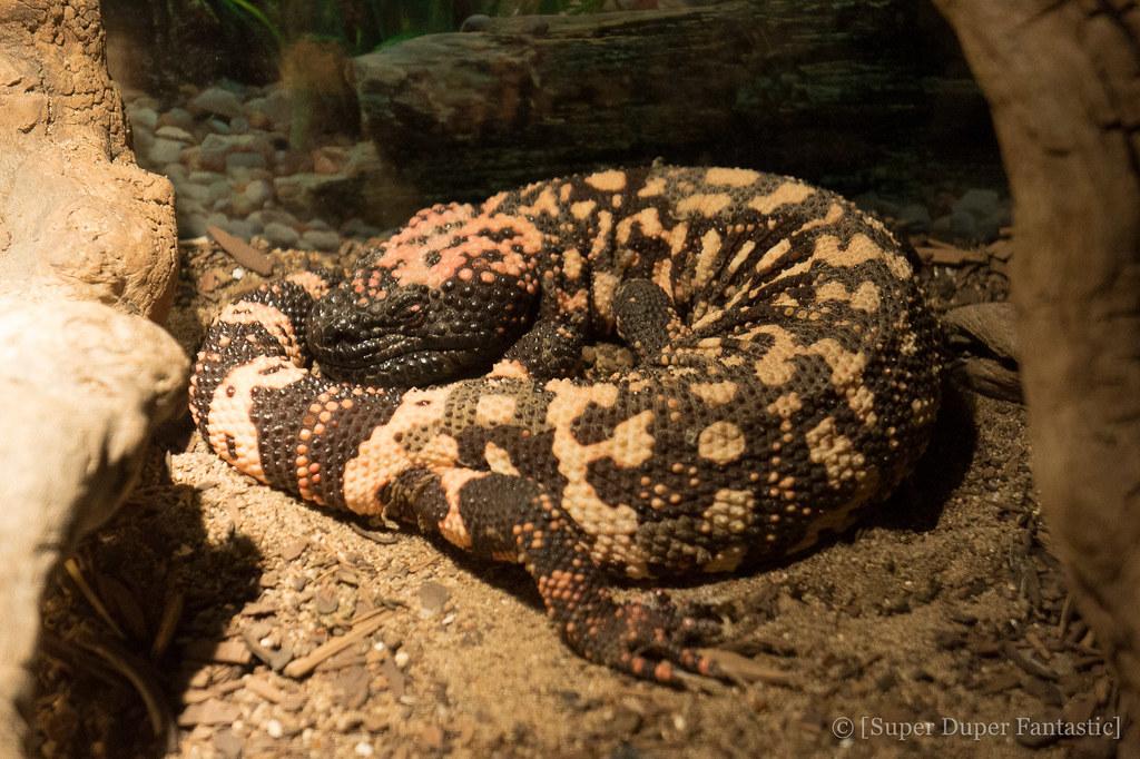 American International Rattlesnake Museum