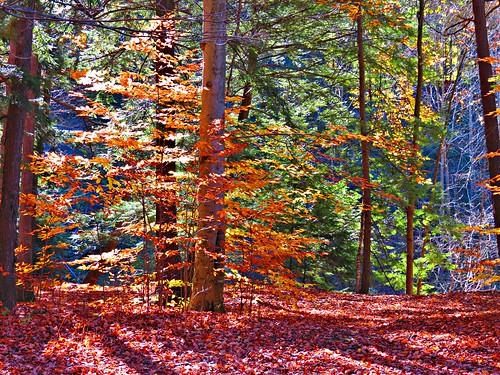 toronto ontario canada fall seasons fallcolours thomasjbatatrail wilketcreekpark